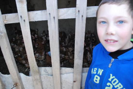 Proiect de sprijin social inedit: Găini de țară pentru un trai decent